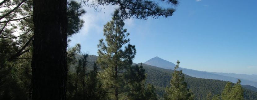 Tenerife Walking Festival reforestation in the mount La Esperanza
