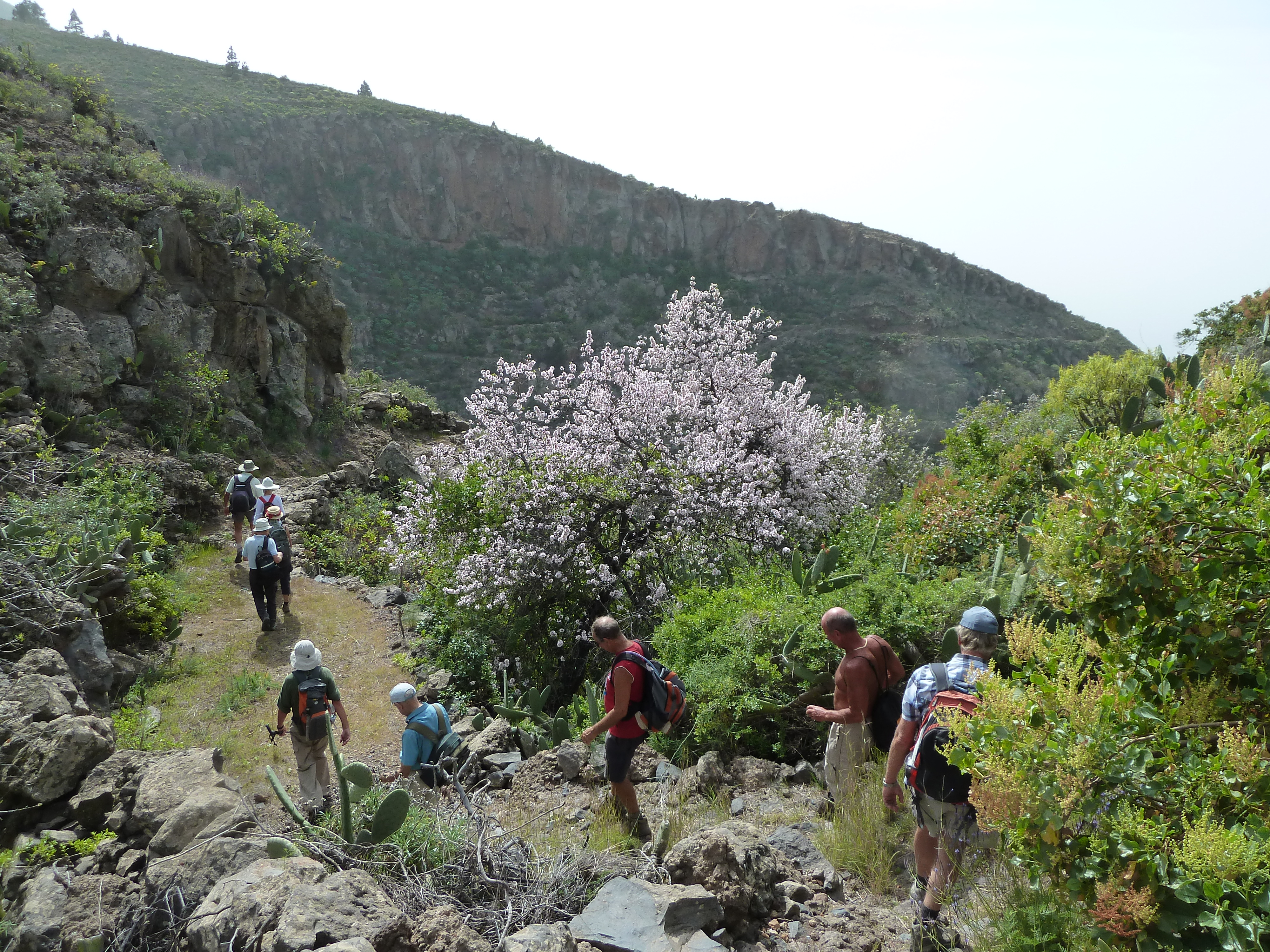 Almond blossom route in Tenerife