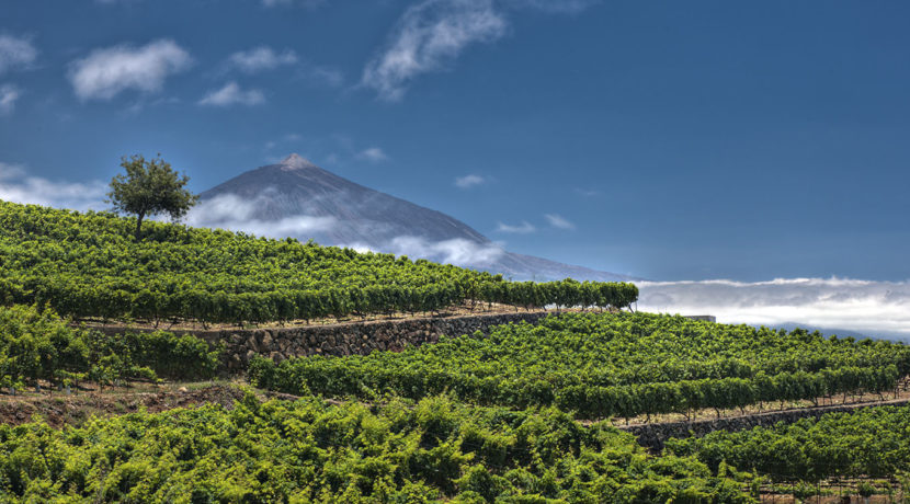 Canary Islands wines are launched to the conquest of the USA under the brand Canary Wine